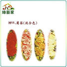 【綠藝家】H11.蜀葵(混合色,高150...