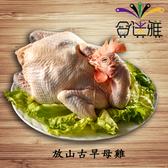 【冷凍免運直送】放山古早母雞【普通袋裝】(1.6~2.0公斤/袋) -02