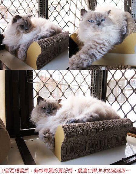 ★國際貓家★Box Meow~U型貴妃貓抓板(B3,新品免運)