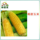 【綠藝家】G07.超甜玉米 (黃穗)種子...