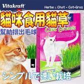 【zoo寵物商城 】德國vita VitaKraft》天然貓草栽種套組-120g