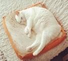 【創意生活】ig 爆紅 熱賣款! 貓奴必備 吐司坐墊 貓咪坐墊 【H00615】