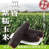【WANG-全省免運】黑寶紫糯米玉米X3斤±10%(250-300克±10%/根)