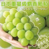 【果之蔬-全省免運】日本麝香綠葡1串禮盒X1盒【每串約550g±10%】