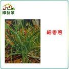 【綠藝家】D01.細香蔥種子200顆