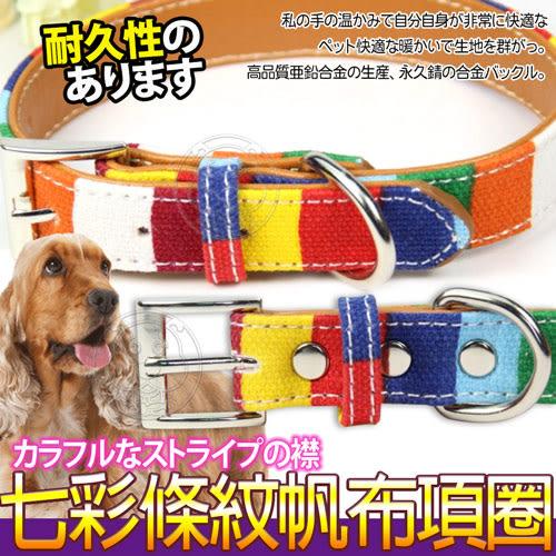 【培菓平價寵物網】dyy》七彩條紋寵物帆布項圈M號3*50cm中型犬專用