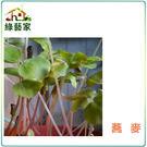 【綠藝家】大包裝蕎麥芽種子700公克(蕎...