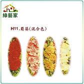 【綠藝家】H11.蜀葵(混合色,高150cm)種子40顆
