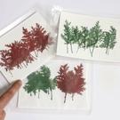 青蒿松 蒿葉染色 乾花押花滴膠手機殼材料 一包10片裝