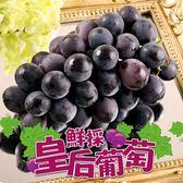 【愛上新鮮】鮮採皇后巨峰葡萄 4盒組(500g±10%/盒)