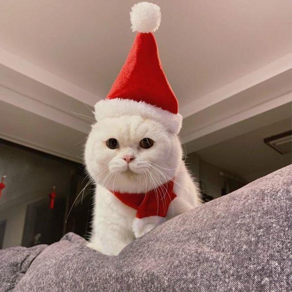 「喵幸」寵物頭套貓圣誕帽貓貓頭套貓咪頭飾裝扮圍巾圣誕節帽套裝