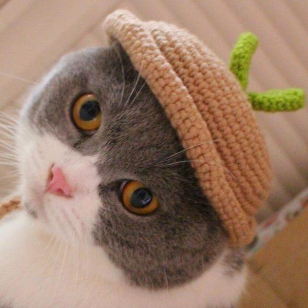 頭頂長草貓頭套旅行帽豆芽賣萌造型帽英短折耳貓咪帽寵物拍照道具
