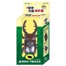 發條甲蟲(扁鍬形蟲)