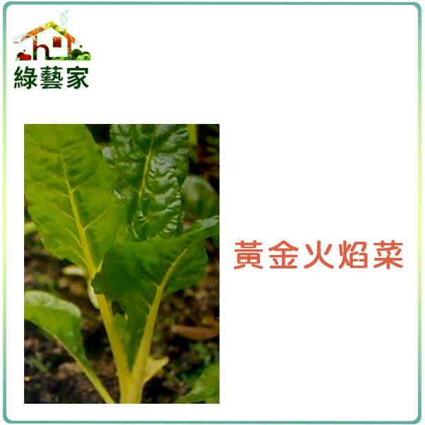 【綠藝家】A42.黃金火焰菜種子100顆 (黃金菾菜、君達菜、甜菜)