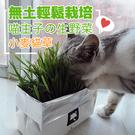 ONEWAY 有機無土貓草 DIY貓草種...