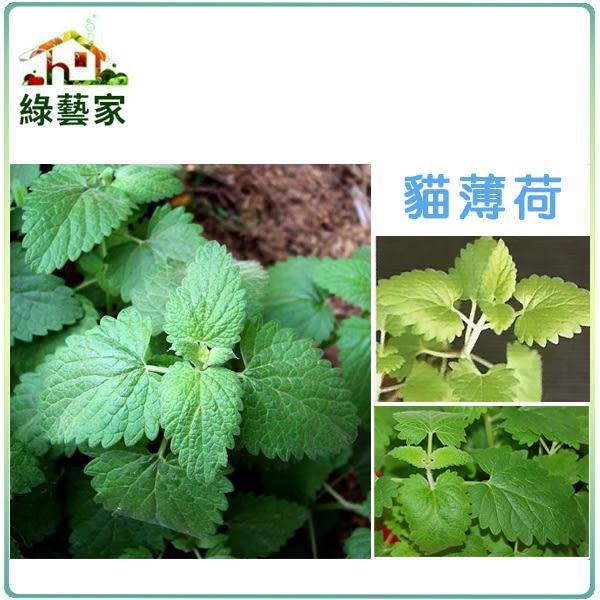 【綠藝家】大包裝K14.貓薄荷種子1500顆