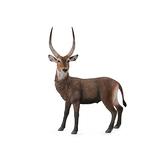 【永曄】collectA 柯雷塔A-英國高擬真動物模型-野生動物系列-公鹿