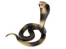 【4D Master】20136D 立體拼組模型 動物系列 眼鏡蛇王 King Cobra