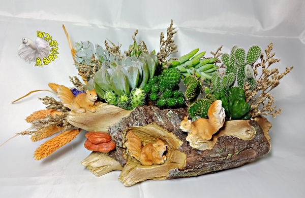 連植物整組出售! 枯木松鼠造形 多肉植物仙人掌+乾燥花組合盆栽 送禮首選