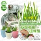 貓草 紓壓著色植栽組 寵物夢工廠 盆栽 澳洲製造吊掛盆栽 貓草盆栽 貓咪紓壓 療癒 著色