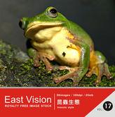 【軟體採Go網】IDEA意念圖庫 東方影像系列(17)昆蟲生態★廣告設計素材最佳選擇★