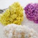 永生花花材,多層蠟菊,一份約10個花朵