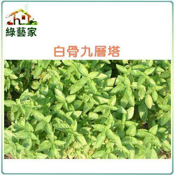 【綠藝家】大包裝F01.九層塔 (白骨羅勒)種子15克(約9300顆)