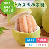 麻豆天柚果園 文旦寶級(5斤裝/箱;約8~11個)含運組【766雜貨小舖】
