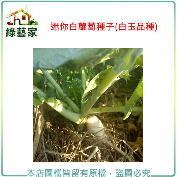 【綠藝家】C12.迷你白蘿蔔種子100顆(白玉品種)