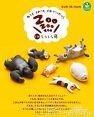 扭蛋 TOMY多美扭蛋 休眠動物園1 治癒系躺睡動物第一彈 柴犬 二度3C