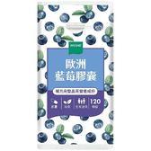 歐洲藍莓膠囊(120粒)【WEDAR 薇達】買多更優惠