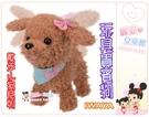麗嬰兒童玩具館~日本IWAYA專櫃-散步小狗系列-玩具貴賓狗/瑪爾濟斯-電視廣告商品