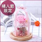 鮮花製成永生玫瑰不凋花(玻璃罩+木底座)-粉色相思 微景觀瓶 乾燥花 情人節禮物 結婚禮物