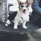 寵物眼鏡寵物太陽鏡