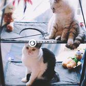 貓咪吊床日本伊淳貓床吸盤式掛鉤貓吊床 雙層沙發寵物貓窩