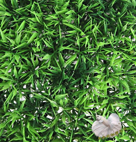 雞尾假草皮.人造草皮.牆壁裝飾草皮.仿真草皮.室外腳踏墊 [ 約25*25cm ]