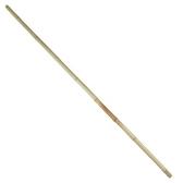 園藝用白竹(大) H180cm