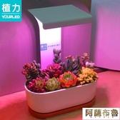 植物燈 植力【桌面補光燈】多肉植物led全光譜上色USB家用室內生石花肉錐 阿薩布魯