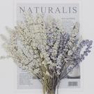 白色薰衣草壓花,一份60支