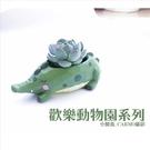 〔〕CARMO歡樂動物園多肉植物花盆盆栽【C01001】
