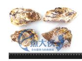C2【魚大俠】BC020日本廣島全殼牡蠣(約9-12顆/1KG)