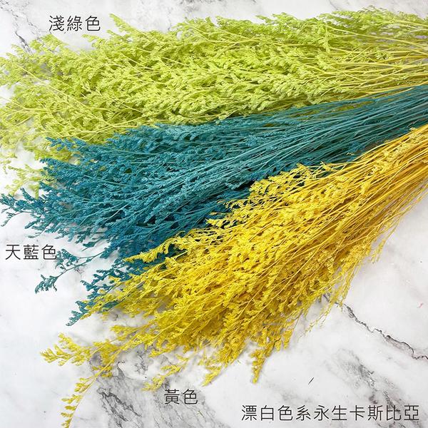進口永生卡斯比亞-不凋花圈 乾燥花束 拍照道具 室內擺飾 乾燥花材 鄉村風-50元/束
