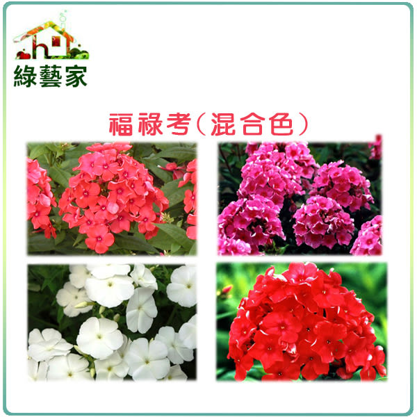 【綠藝家】H36.福祿考(混合色,高25~30cm)種子30顆