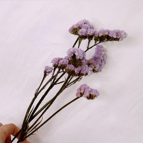 【BlueCat】天然植物勿忘我拍攝道具