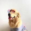 寵物貓咪大狗狗眼鏡墨鏡