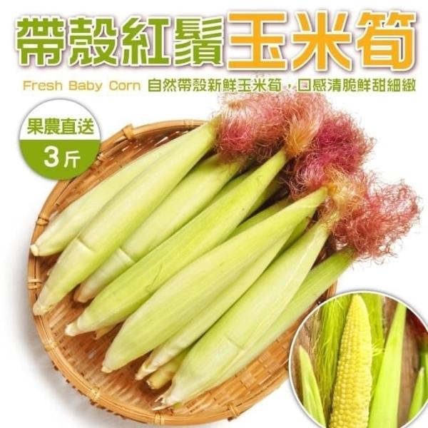 【WANG】【果農直配-全省免運】台灣紅鬚帶殼玉米筍【3台斤±10%】