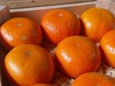 [苗栗]採果體驗-橘二代(柑橘、香橙)