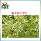 【綠藝家】H30.滿天星(白色,高60~...