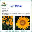 【綠藝家】H41.大花向日葵種子5顆