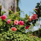 裝飾花藤仿真植物陽台房頂纏繞假花藤條空調...
